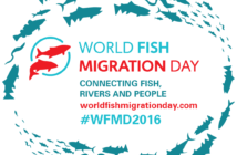 World Fosh Migration Day 2016, WWF