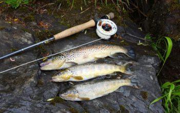 Alp, Bachforellen, Fangmeldung, Fliegenfischen, Nympe