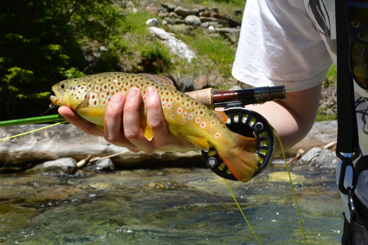 Nymphenfischen, Bachforelle, Fliegenfischen, Fischen, Angeln, Alpenn-Fischer, Bergbach, Köcherfliegenlarven
