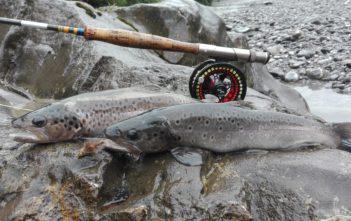 Forelle, Bachforelle, Fliegenfischen, fischen, angeln, Angler, Fischer, Streamer, Bachfischen, Bregenzer Ach, Alpenfischer, alpen fischen, Salmonide