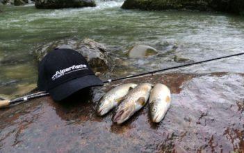 Bachforelle, Fliegenfischen, fischen, angeln, Nymphe, Fang, Ferienfang, Alpenfischer, Alpen fischen