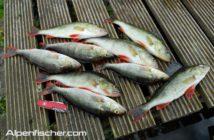 Konkordatsbericht 2016, Jahresbericht der Fischereikommission für Zürichsee, Linthkanal und Walensee, Statistik Fischerei Zürich, Alpenfischer, fischen, angeln, Linthkanal, Zürichseer