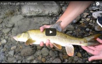 Fischen, Fischer, Alpenfischer, Sportfischer, Limmat, Barbe, Egli