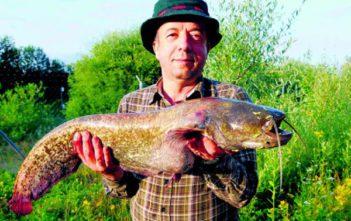 Wels, Nachtfischen, Aargau Freianglerkarte, Fischer, Angler, fischen, angeln, Grundfischen, Sportfischen, Kapitaler Fang, Alpenfischer, Alpen fischen