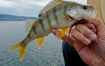 en, angeln, Alpen fischen, Petri-Heil, Petri Heil