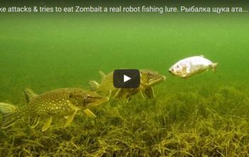 Robot_Köder, Hecht; Irland fischen, Fischer, fischen, Angler, Angeln