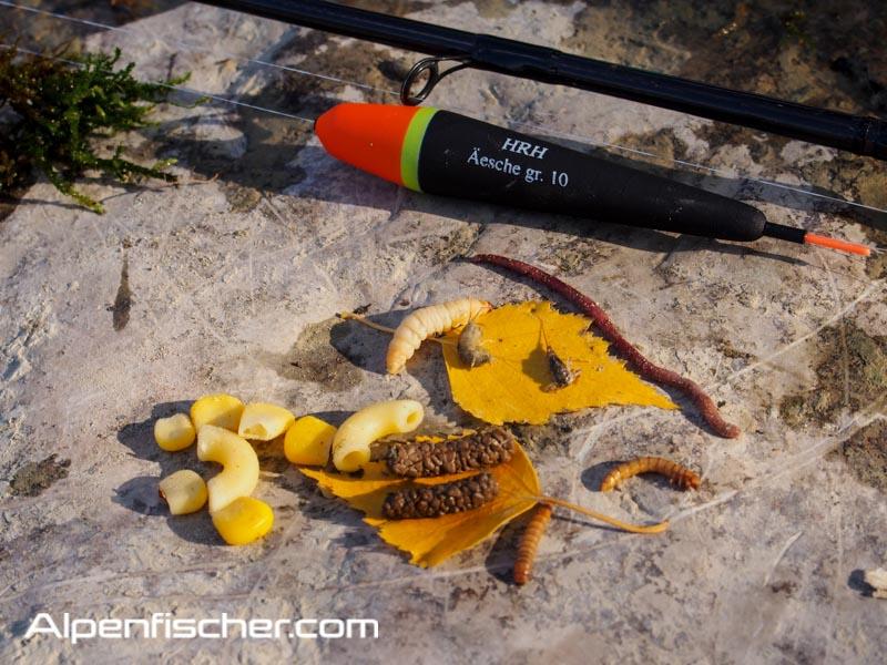 Naturköder auf Aeschen fischen, Alpenfischer, fischen, angeln, Flussfischen auf Äschen, Güllenmade, Mehlwurm