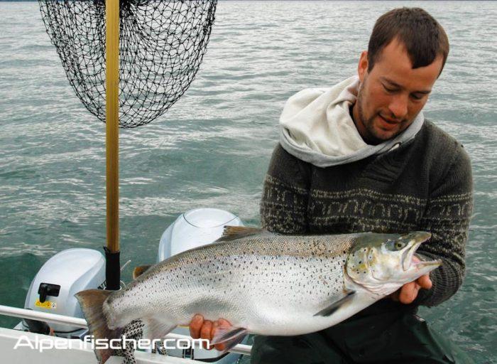 Seeforellenstart, Saisoneröffnung Seeforelle, Seeforellen Tipps & Tricks, Alpenfischer, Alpen fischen, Petri Heil, fischen, angeln