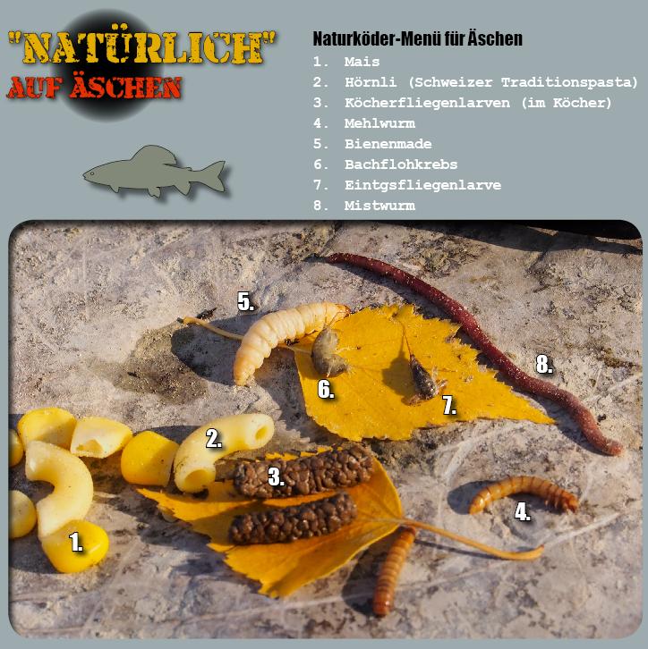 Naturköder auf Aeschen fischen, Alpenfischer, fischen, angeln, Flussfischen auf Äschen, Mais, Güllenmaden, Flohkrebs, Hörnli, Bienemade, Köcherfliegenlarve, Mehlwurm