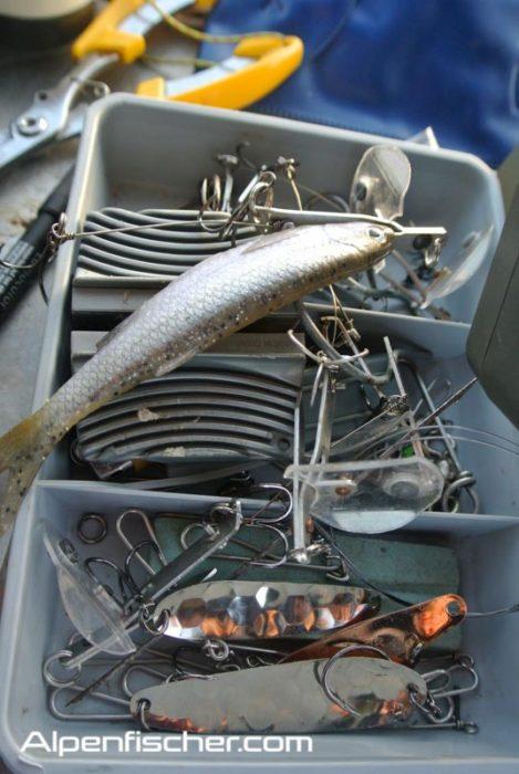 Seeforellenstart, Saisoneröffnung Seeforelle, Seeforellen Tipps & Tricks, Alpenfischer, Alpen fischen, Petri Heil, fischen, angeln, Seefolöffel