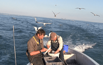 Bodensee, Phosphat, Fischer, Angler, Berufsfischer, Alpenfischer