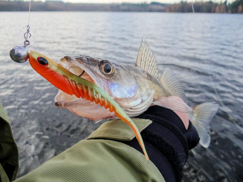 , Raubfische im Winter fangen, Alenfischer, fischen, angeln, Tipp im kalten Wasser auf Raubfische