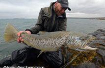 Riesenforellen Island, Monsterforellen, Brown Trout, Thingvallavatn See, Alpenfischer, Petri Heil