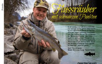 Flussforellen, Praxistipps auf Forellen im Fluss, Bachforellen, Saisonstart 1. Februar, Diessenhofen, Linth