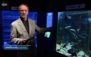 Fischlexikon, Alpenfischer, Wissensdatenbank Fische