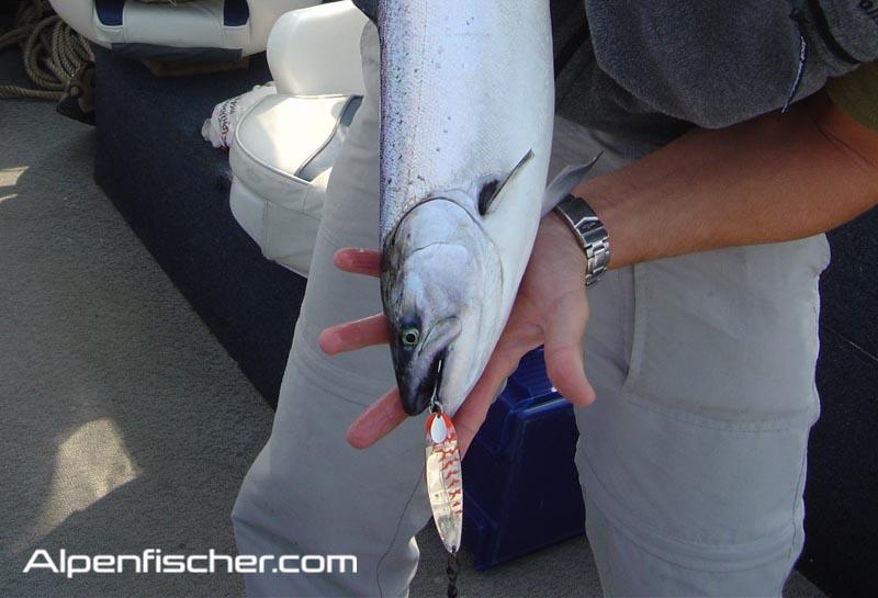Löffel-Tuning, Schlepplöffel, Perlmut-Spangen, Alpenfischer, Seeforellen, Schleppfischen, Petri Heil, angeln, fischen