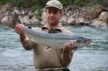 Alpenfischer, Lachsfischen, Baglimit, Fangfenster, Selektive Entnahme, Fischereigesetz, Catch & Release, fischen, angeln