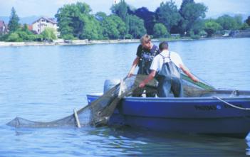Alpenfischer, Bodensee, Berufsfischerfänge Bodensee, Angelfänge Voralrberg, fischen, angeln