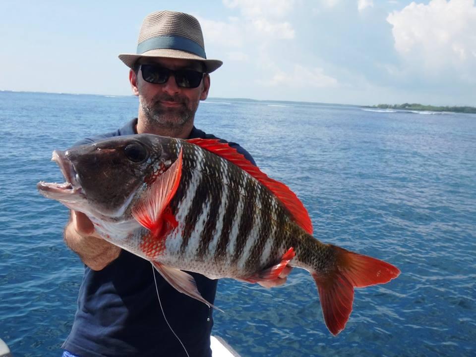 Ciguatera, Fischvergiftung, Alpenfischer, Angelreise, Meeresangeln, Petri Heil, angeln, fischen