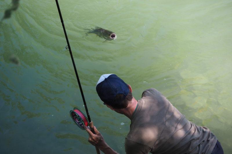 Alet, Kirschen, Chriesi, Aletfischen, Alpenfischer, angeln, Döbel fangen, Flussfischen