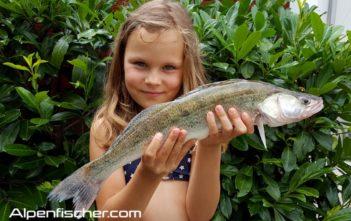 angeln, fischen, Zander, Alpenfischer