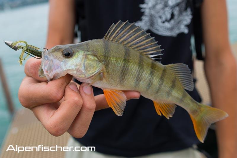 angeln, fischen, Barsch, Egli, Dropshot