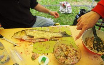 Alet, Kirschen, Chriesi, Aletfischen, Alpenfischer, angeln, Döbel fangen, Flussfischen, Alet Rezept, Döbel Rezept