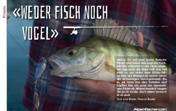 Fischen, angeln, Barsch, Spinner-Jig