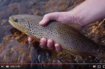 Angeln, Fischen, Alpenfischer