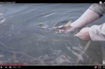 Alpenfsicher, Angeln, Fischen