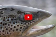 Alpenfischer, Angeln, Fischen, Video
