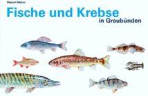 Fische und Krebse in Graubünden