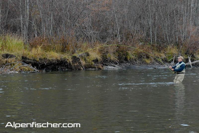Alpenfischer, Steelhead Forelle