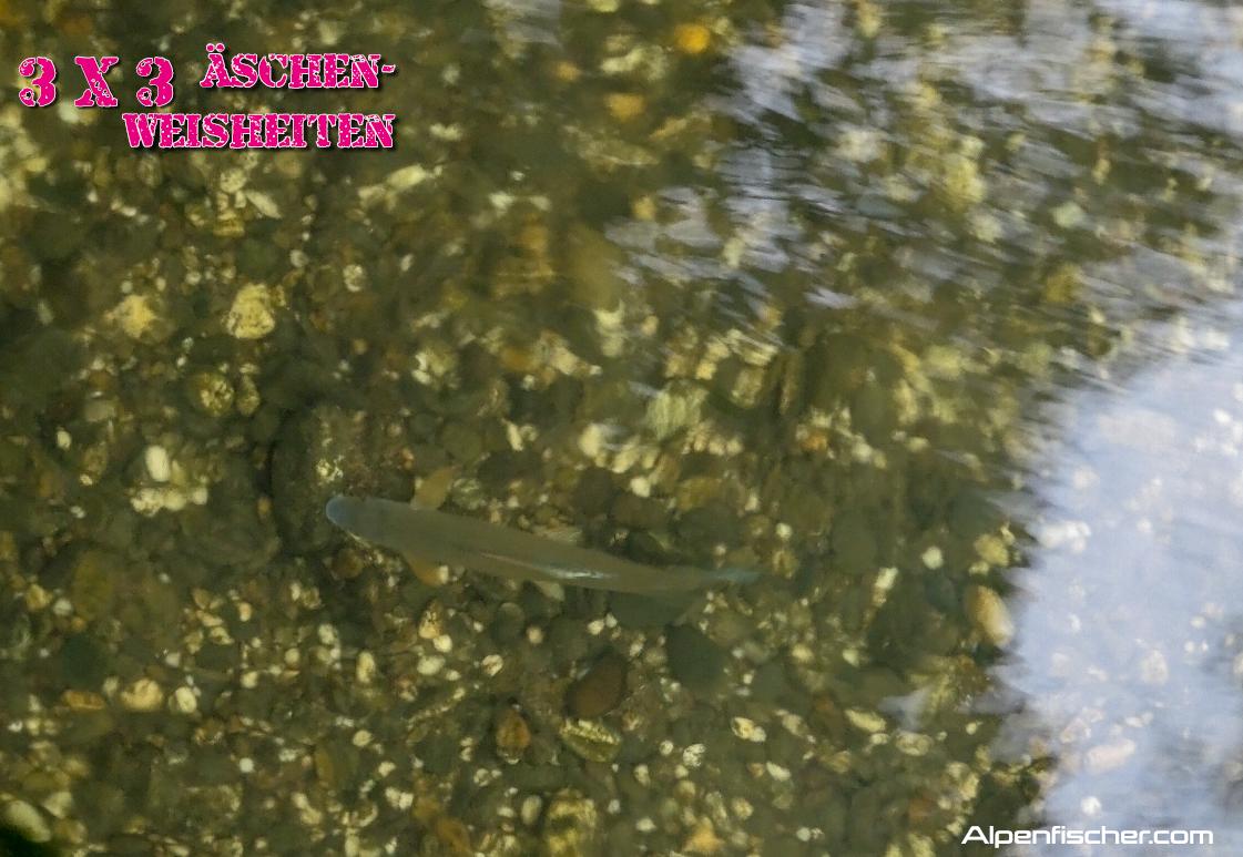 Äsche, Alpenfischer, fischen