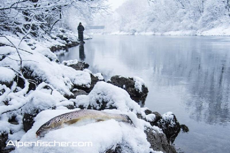 Saisonstart Forellen, Linthkanal, Forellenangeln, Spinnfischen, ALpenfischer, fischen, angeln, Flussforelle