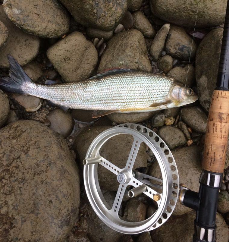 LAufrolle Aeschenfischen, Äschenangeln, Flussfischen, Alpenfischer,