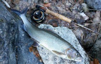 Äschenfischen, ALpenfischer, fischen, angeln, Fliegenfischen