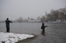 Hochrhein Forellenfischen, Bad Zurzach angeln