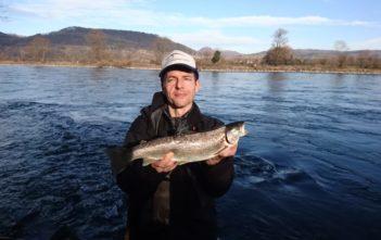 Flussforelle, Spinnfischen-Forelle, Alpenfischer, Rheinforelle
