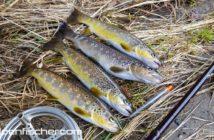 Forellen, Fischen, Alpenfischer