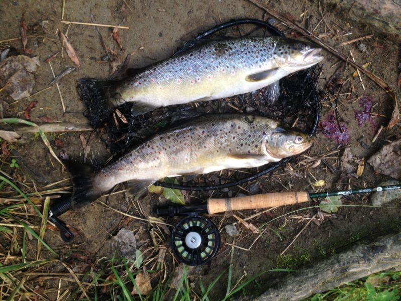 Fliegenfischen Neuseeland, Forelle Trockenfliege, Alpenfischer, fischen, angeln