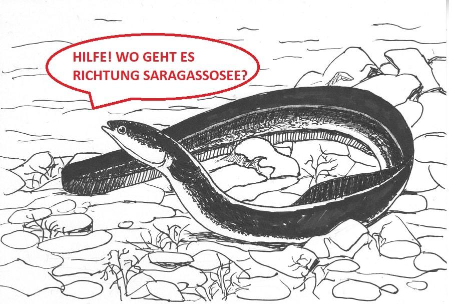 Saragassosee, Aale auf Drogen, Kokain, Alpenfischer, Kläranalgen
