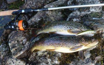 Angeln Norwegen, Bergseeforellen, Südnorwegen fischen