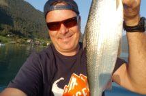 Renken, Felchen, Alpenfischer