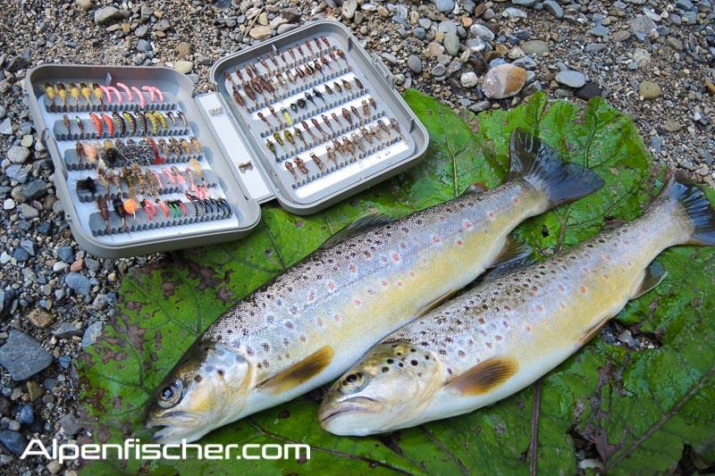 Fischen, Forelle, Fliegenfischen, Alpenfischer