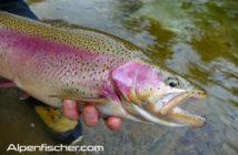 Fischen, Alpenfischer, Regenbogenforelle