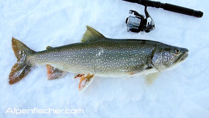 Namaycush saibling, Eisfischen, Alpenfischer