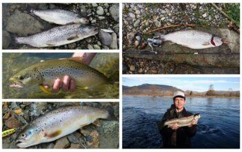 1. März Saisonstart Rhein, Forellenfischen, Saisoneröffnung Forlelen Rhein