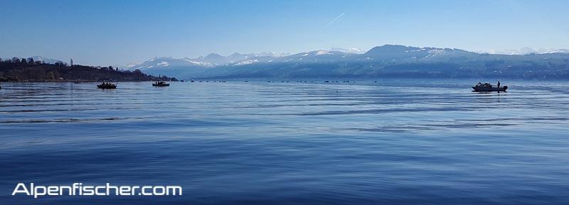 Felchen, Alpenfischer