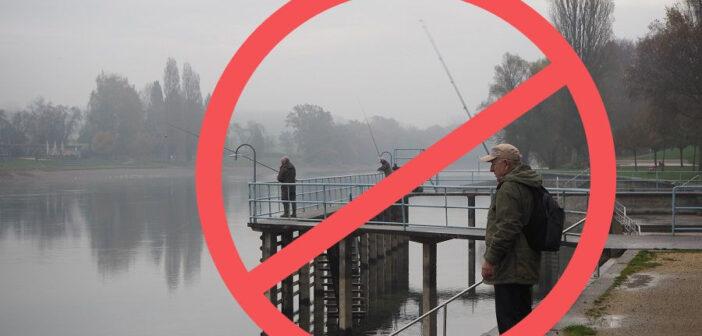 Aeschensterben Rhein, Fangmoratorium Rhein, Fischsterben Rhein, Hitzesommer Äschen sterben